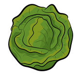 Cabbage  illustration Stock Image