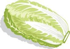 Cabbage illustration Stock Photo