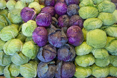 Free Cabbage In Green And Red Stock Images - 24682634