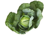 Cabbage Isolated Stock Images
