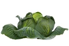 Cabbage isolated on white Royalty Free Stock Image