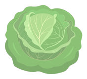 Cabbage isolated Stock Photo