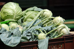 Cabbage and kohlrabi Royalty Free Stock Photography