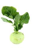 Cabbage kohlrabi Stock Image