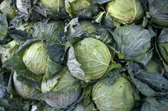 Cabbage at Lach Market, Ben Tre province, Vietnam Stock Image