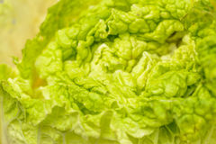 Cabbage leaf Royalty Free Stock Image