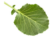 Cabbage leaf isolated Stock Photography
