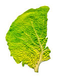 Cabbage leaf structure Stock Photos