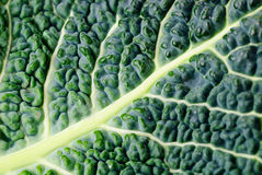 Cabbage leaf texture Stock Photo