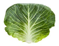 Cabbage leaf Stock Photo