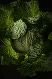 Cabbage Leaves. Fresh and green Stock Photos