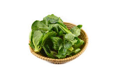 Cabbage leaves basket Stock Photos