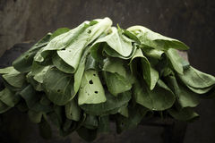 Cabbage leaves Royalty Free Stock Images