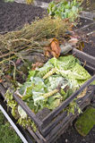 Cabbage leaves on a compost heap Stock Image