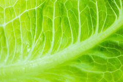 Cabbage leaves Stock Images