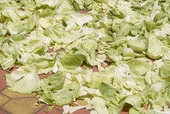 Cabbage leaves Stock Photography