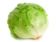 Cabbage lettuce stock photos