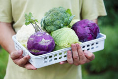 Cabbage at the man Royalty Free Stock Photos