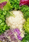 Cabbage and other greens Royalty Free Stock Photos