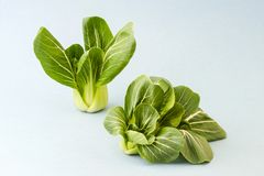 Cabbage Pak-choi salad on a light blue background. Royalty Free Stock Images