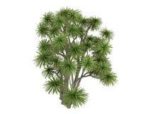 Cabbage_Palm_(Cordyline australis). Rendered 3d isolated Cabbage Palm (Cordyline australis Stock Photography