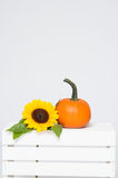 Cabbage and pumpkin Royalty Free Stock Photography