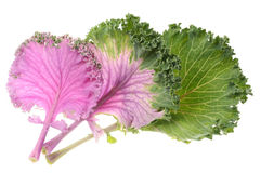 Cabbage purple Royalty Free Stock Photography
