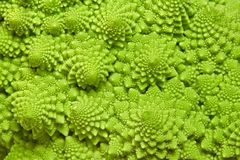 Cabbage romanesco background Royalty Free Stock Image