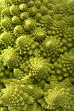 Cabbage romanesco broccoli background Royalty Free Stock Image