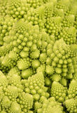 Cabbage romanesco Stock Images
