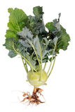 Cabbage with roots and leaves Royalty Free Stock Photos
