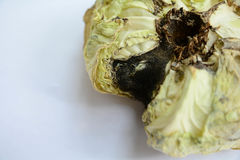 Cabbage rotten vegetables on white backgrounds. Cabbage rotten vegetables on white backgrounds Royalty Free Stock Image