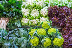 Cabbage and salad at a market Stock Photography