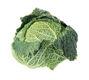 Cabbage savoy head Royalty Free Stock Image