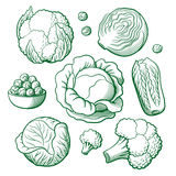 Cabbage set Royalty Free Stock Image