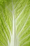Cabbage sheet close up Stock Photos