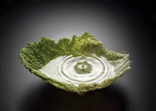 Cabbage splash Stock Image