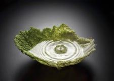 Cabbage splash stock image