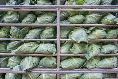Cabbage in steel cage Royalty Free Stock Image