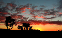 Cabbage Tree Sunset. Simple but wonderful sunset with a warm glow Royalty Free Stock Photo
