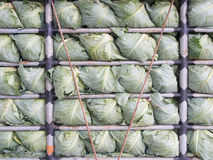 Cabbage in the truck. Fresh vegetable Stock Images