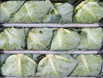 Cabbage in the truck. Fresh vegetable Stock Photos