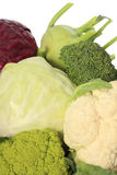 Cabbage varieties Royalty Free Stock Photos