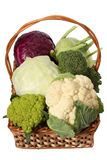 Cabbage varieties Royalty Free Stock Photography