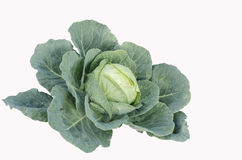 Cabbage vegetable with leafs Royalty Free Stock Photos