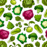 Cabbage vegetables vector seamless pattern Stock Photos