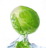 Cabbage in water. Fresh cabbages in water. Close up Stock Images
