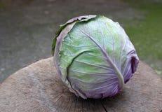 Cabbagehead Lizenzfreies Stockbild
