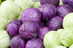 Cabbages Royalty Free Stock Photos