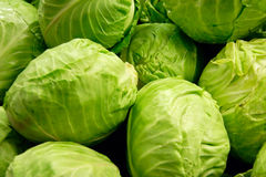 Cabbages Royalty Free Stock Images